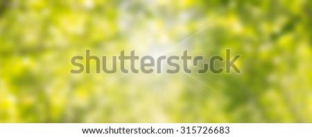 Natural green blurred background. Blurring background. Blurred light. Variety of color. Background for motivational text. Bokeh background. Soft green natural bokeh background.