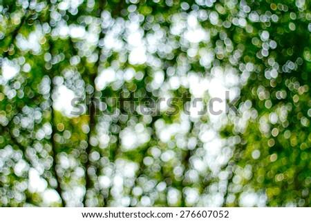 Natural green blurred background. Defocused green blurred background.