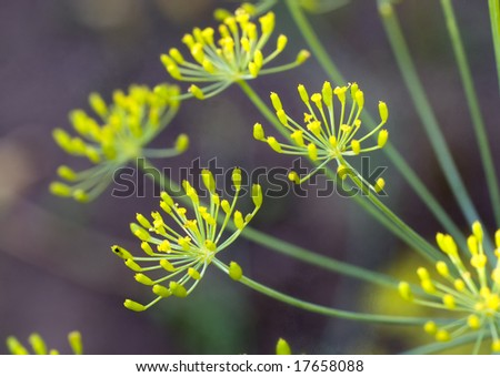 Natural green fennel-dill background