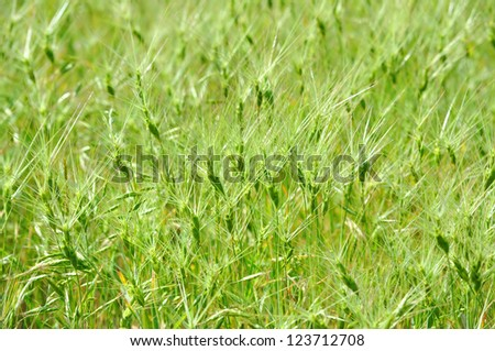 Natural green grass background (selective focus)