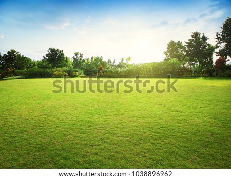 Natural green grass field in sunrise