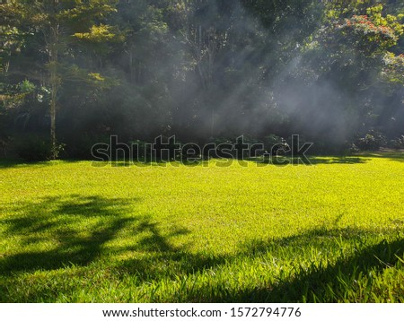 Natural green grass in forest background. Sunny forest early in the morning on rainy season. Nature background concept: Nature tree nature light background.
