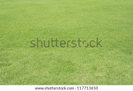 Natural green grass  texture useful for background