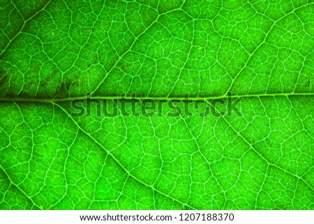 Natural green leaf fresh detailed rugged surface structure extreme macro closeup photo with midrib and visible leaf veins and grooves as a nature texture eco green biology background.