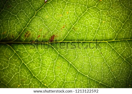 Natural green leaf fresh detailed rugged surface structure extreme macro closeup photo with midrib and visible leaf veins and grooves as a nature texture ecology green biology background.