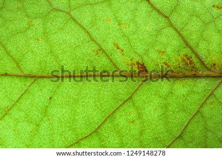 Natural green leaf fresh detailed rugged surface structure extreme macro closeup photo with midrib visible leaf veins, grooves and imperfections as a nature texture ecology green biology background.