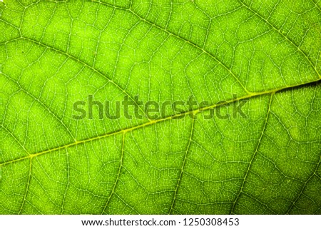 Natural green leaf fresh detailed rugged surface structure macro closeup photo with diagonal midrib leaf veins, grooves and imperfections as a nature texture ecology green biology background.