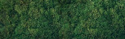 Natural green moss background. Top view. Copy space. Biophilic design. Organic, wild nature concept. Banner