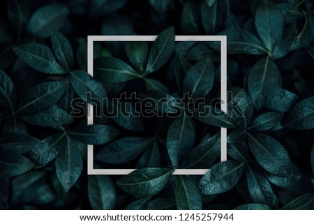 Natural green plant pattern background with white square frame post. Dark nature layout design top view. Moody photo filter.