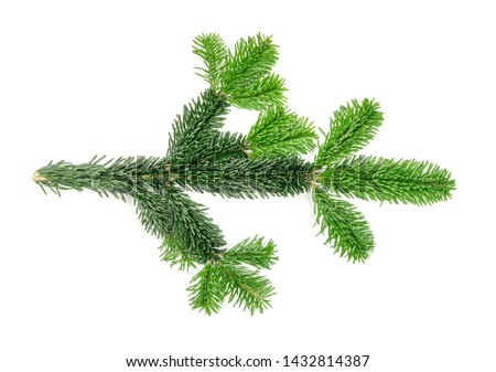 Natural green spruce twig isolated on white background. Lush fir branches or pine twigs sprig texture top view #1432814387