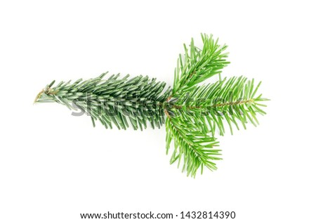 Natural green spruce twig isolated on white background. Lush fir branches or pine twigs sprig texture top view #1432814390