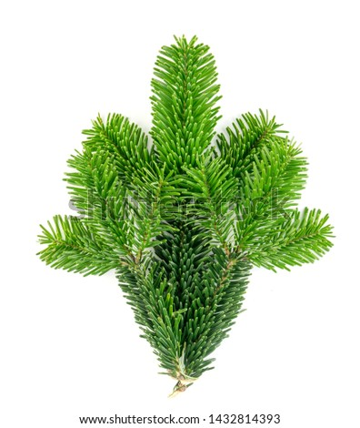 Natural green spruce twig isolated on white background. Lush fir branches or pine twigs sprig texture top view #1432814393