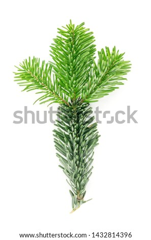 Natural green spruce twig isolated on white background. Lush fir branches or pine twigs sprig texture top view #1432814396