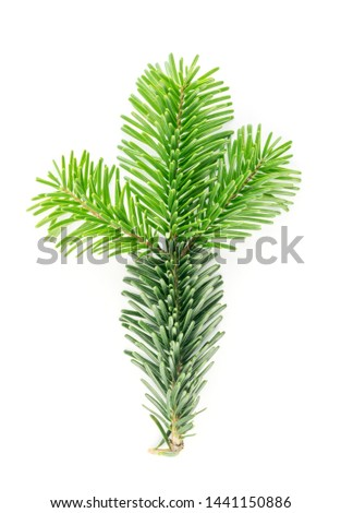 Natural green spruce twig isolated on white background. Lush fir branches or pine twigs sprig texture top view #1441150886