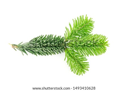 Natural green spruce twig isolated on white background. Lush fir branches or pine twigs sprig texture top view #1493410628