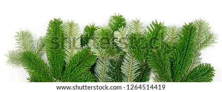 Natural green spruce twig isolated on white background. Lush fir branches or pine twigs top view #1264514419