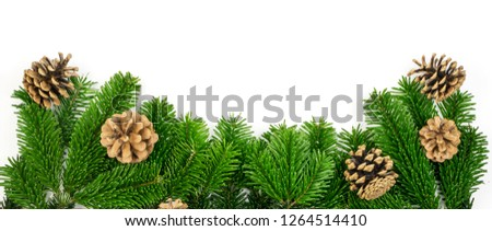 Natural green spruce twig isolated on white background. Lush fir branches or pine twigs with pinecones top view #1264514410