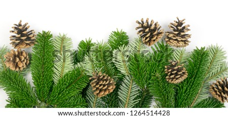 Natural green spruce twig isolated on white background. Lush fir branches or pine twigs with pinecones top view #1264514428