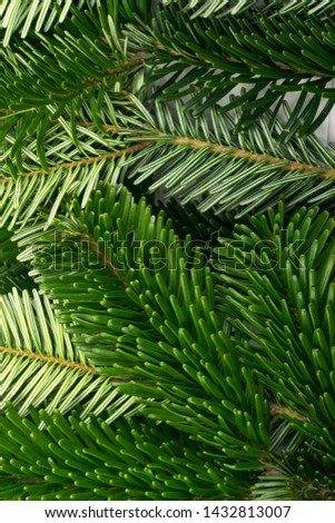 Natural green spruce twig on white background. Lush fir branches or pine twigs sprig texture top view #1432813007