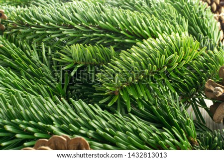 Natural green spruce twig on white background. Lush fir branches or pine twigs sprig texture top view #1432813013