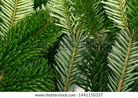 Natural green spruce twig on white background. Lush fir branches or pine twigs sprig texture top view #1441150337