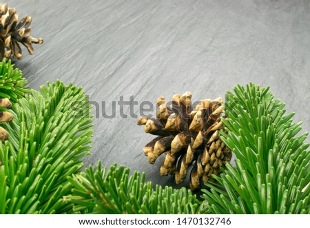 Natural green spruce twig on white background. Lush fir branches or pine twigs sprig texture top view #1470132746