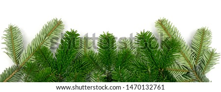 Natural green spruce twig on white background. Lush fir branches or pine twigs sprig texture top view #1470132761