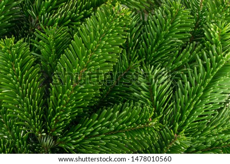 Natural green spruce twig on white background. Lush fir branches or pine twigs sprig texture top view #1478010560