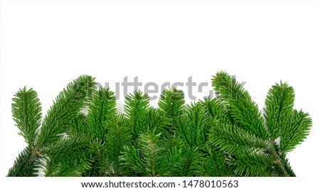 Natural green spruce twig on white background. Lush fir branches or pine twigs sprig texture top view #1478010563