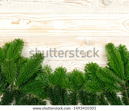 Natural green spruce twig on white background. Lush fir branches or pine twigs sprig texture top view #1493410301