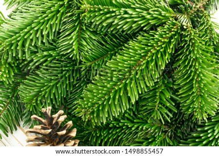 Natural green spruce twig on white background. Lush fir branches or pine twigs sprig texture top view #1498855457
