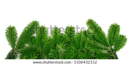 Natural green spruce twig on white background. Lush fir branches or pine twigs sprig texture top view #1506432152