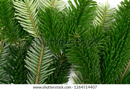 Natural green spruce twig on white background. Lush fir branches or pine twigs top view #1264514407