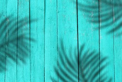 Natural green wooden boards with hard shadows from palm. Summer background. Bright mint painted fence for backdrop. Natural tree texture.