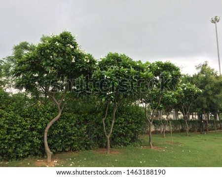 Natural greenery with sky before rains  #1463188190