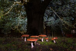 Natural growing fly agaric growing under a three decorated with christmas lightning.  Christmas mushroom growing in Belgium flanders.  Pics for the christmas mood, no photoshop, picture perfect magic.