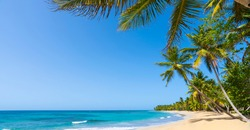 Natural Hawaiian palms beach landscape in summer sunny day. Coconut palm trees and palm leaves hang over a beautiful blue sea and sky.