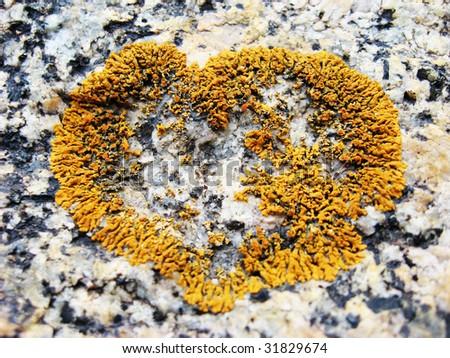 Natural heart shape