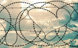 Natural heart shape in a barbed wire fence on cloudscape background. Flock of birds flying through heart. Love, freedom, peace, hope and compassion concepts.