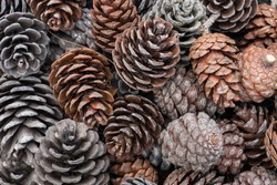 natural holiday background with pinecones grouped together