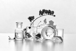 Natural laboratory in black and white. Abstract floral arrangement with exotic monstera leaves in transparent glass vases, jars, vials. Reflections, floral elements distorted in pure clear water.