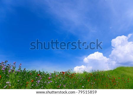 Natural landscape. Green grass with red poppies and blue sky with clouds