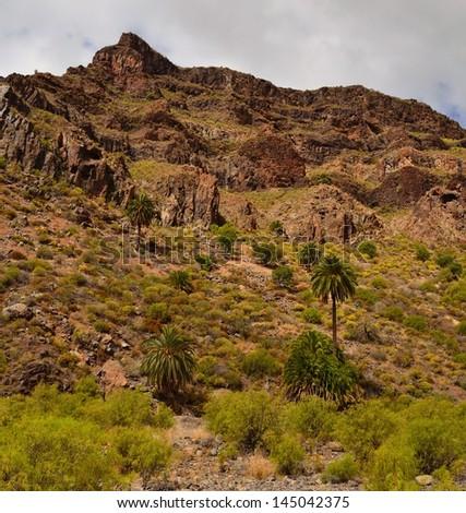 Natural landscape in Ravine of Tirajana, Gran canaria, Canary islands #145042375