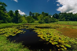 Natural landscape in the countryside with lake, regal victories and tropical forest on a sunny blue sky day.
