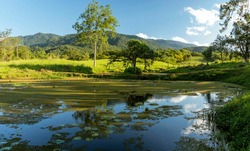 Natural landscape of the farm field. Lake with regal victories, lawn, fence, forest, trees, mountain and blue sky on a sunny day.
