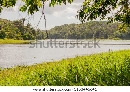 natural landscape of the metropolitan park of Salvador, Bahia, Brazil. #1158446641