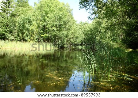 Natural landscape on the shores of an idyllic lake  N