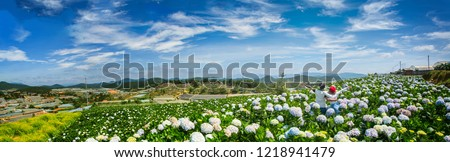 Photo of  Natural Landscape view of purple Hydrangea flower (Hydrangea macrophylla) in a garden with mountain and blue sky at Dalat, Vietnam. Hydrangea is a genus of flowering plants native to Asia and Americas