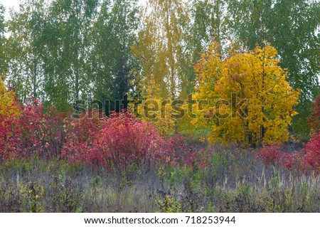 natural landscapes. Autumn landscape. Red and yellow leaves stain trees and bushes. Indian summer. The most beautiful time of year - Shutterstock ID 718253944