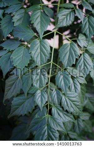 Natural leaf background, leaf background, leaf texture.